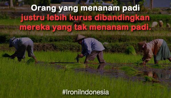 Gambar Ironi Indonesia Yang Menanam Padi Lebih Kurus